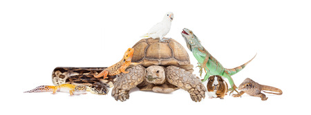 Group of exotic pets sitting together and interacting over white