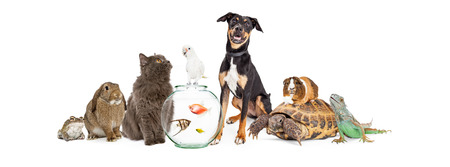 Grote groep van huisdieren zitten bij elkaar in interactie. Geïsoleerd op wit. Stockfoto