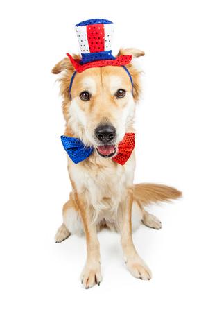 Golden Retriever Mischlingshündin lustig amerikanischen patriotischen Hut und Fliege Standard-Bild - 52292354