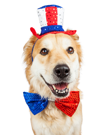 Happy and smiling Golden Retriever mixed breed dog wearing a red, white and blue patriotic hat and bow tie Stock Photo