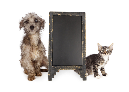 rescue: Shy and scared rescue kitten and little dog with scruffy and dirty fur sitting next to blank chalkboard sign Stock Photo