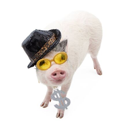 bellied: Funny photo of a pig wearing a pimp hat, yellow sunglasses and a necklace with a big dollar sign