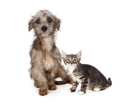 Shy and scared little rescue kitten and puppy with messy and dirty fur