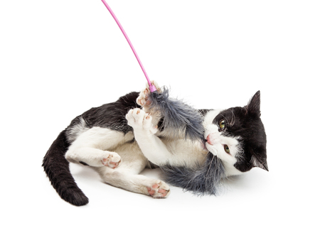 grabbing: Active and playful young cat grabbing a long feather duster toy Stock Photo