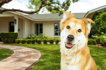 Happy and smiling dog in front of a beautiful suburban house with green front yard Archivio Fotografico
