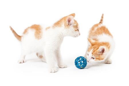 ball isolated: Two cute little kittens playing with a blue ball toy on a white background Stock Photo