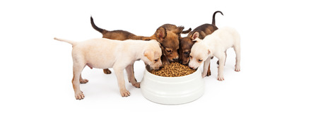 heaping: Litter of small puppies surrounding a large heaping bowl of kibble food
