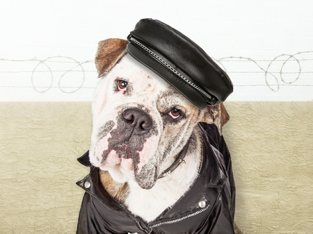 watchdog: Funny conceptual photo of a tough watchdog wearing leather jacket and hat in a secure yard with barbed-wire fence Stock Photo