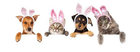 Rangée de chats et de chiens portant des oreilles de lapin de Pâques, accrochant leurs pattes sur une bannière blanche. Image de taille pour adapter un média social calendrier photo placeholder populaire