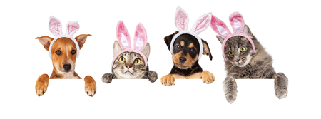 white dog: Row of cats and dogs wearing Easter Bunny ears, hanging their paws over a white banner. Image sized to fit a popular social media timeline photo placeholder