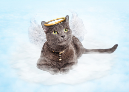 Cat with angel wings and golden halo laying in clouds in the sky Stockfoto