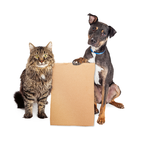 Cat and Dog together holding blank cardboard sign to enter your message onto Foto de archivo