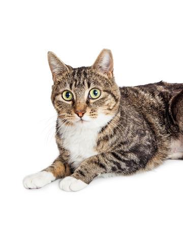 looking into camera: Closeup photo of cute tabby cat looking into camera