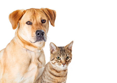 cat isolated: Portrait Dog and Cat With Copy Space