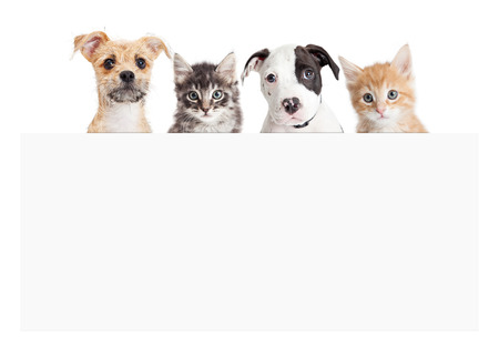 Rij van schattige puppy's en kittens achter leeg wit teken Stockfoto