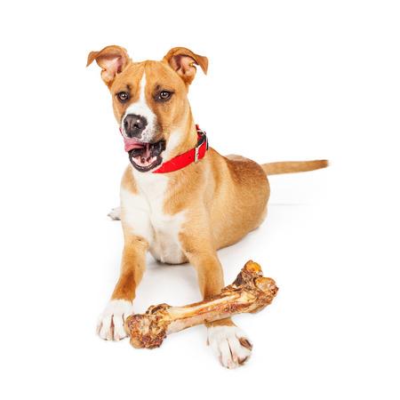 huesos: Perro grande que pone con un hueso grande de masticación, la lengua fuera lamiendo los labios