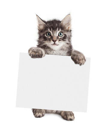 Happy kitten standing up holding a blank sign to enter your message onto