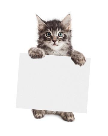 Gelukkig kitten opstaan bedrijf een leeg bord om je boodschap op te voeren Stockfoto