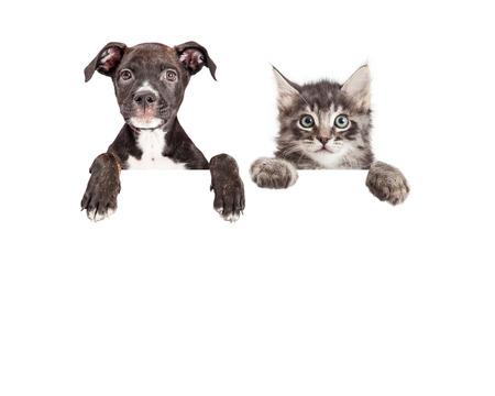 귀여운 강아지와 새끼 고양이 방 텍스트와 빈 기호 위에 매달려 발로 스톡 콘텐츠