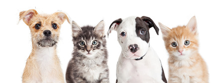 Row of cute puppies and kittens on a long horizontal banner. Sized to fit a popular social media cover placeholder. Stock Photo
