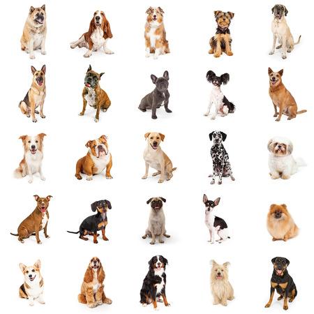 Grand groupe de chiens de race commune assis. Format carré peut être transformé en motif répétitif Banque d'images - 57546394