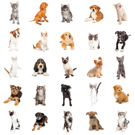 white cats: Large collection of cute puppies and kittens on square white background that can be made into repeating pattern