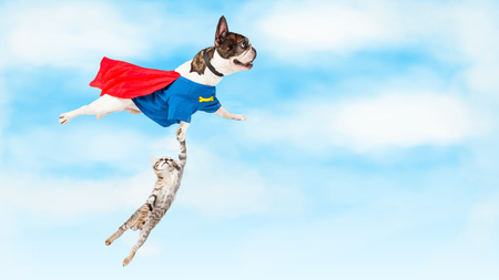 Funny conceptual photo of super hero dog flying through clouds while rescuing a kitten
