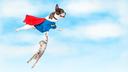 Photo conceptuelle drôle de chien super héros volant à travers les nuages tout en sauvant un chaton