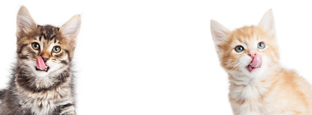 placeholder: Two cute little hungry kittens with tongues out. Horizontal banner fits popular social media cover placeholder