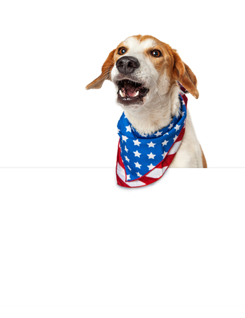 placard: Funny photo of dog over white sign wearing American flag bandana with mouth open barking