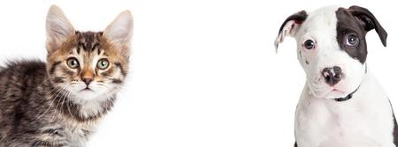 귀여운 젊은 얼룩 고양이와 강아지 카메라를 찾고의 근접 촬영 초상화. 배너는 인기있는 소셜 미디어 표지 이미지에 맞게 크기.