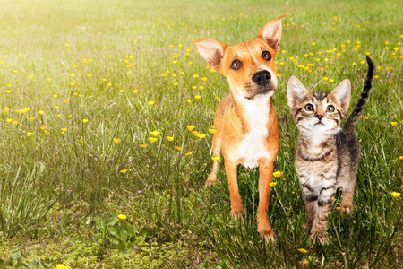 Cute kitten and puppy together in a field of green grass and yellow wild flowers with copy space