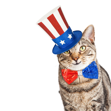 Funny cat wearing patriotic American hat and bow tie