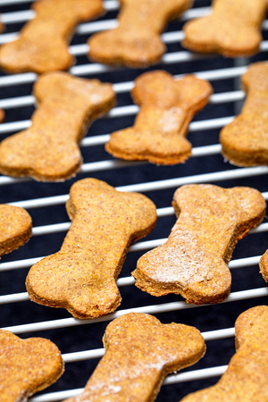 dog biscuit: Fresh homemade peanut butter bone-shaped dog biscuits cooling on a rack