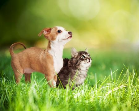 및 bokeh 긴 푸른 잔디에서 귀여운 새끼 고양이와 강아지 야외 공간을 복사합니다