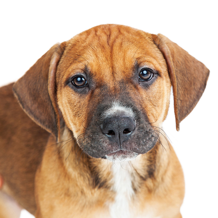 outs: Closeup portrait of a cute little brown color crossbreed puppy