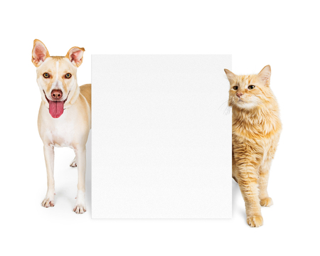 Happy dog and cat standing with blank white sign to enter your text onto.