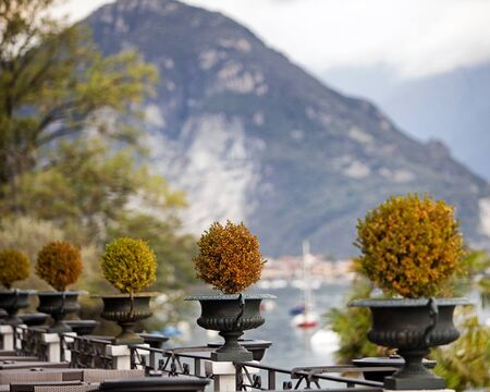 plats: Row of decorative topiary plats along a patio on a scenic lake in Italy Stock Photo