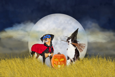 Two dogs wearing Halloween costumes outdoors in a wheat field with night sky and full moon in background