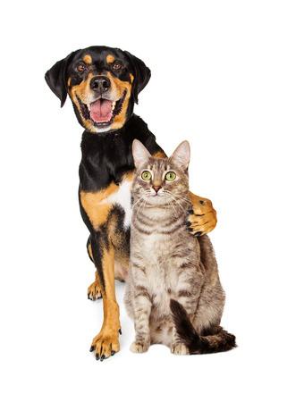 친절한 고양이 주위에 팔 함께 행복하고 웃는 고양이의 재미있는 사진