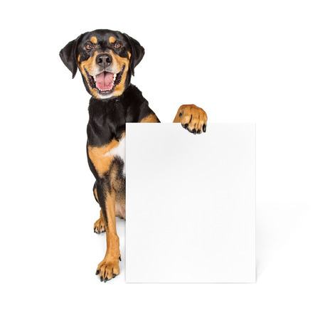 Happy smiling large dog sitting on white holding blank sign to enter your message on Stockfoto
