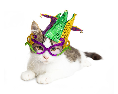 Cute kitten wearing colorful and festive Mardi Gras glasses and jester hat. Isolated on white.