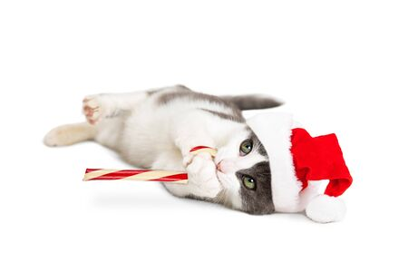 white playful: Cute playful kitten wearing Santa hat holding candy cane. Isolated on white.