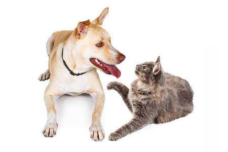 Happy and friend;y dog and cat looking at each other and playing