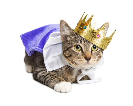 Kitten wearing prince costume Stockfoto