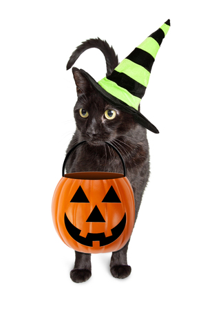 Cute black cat wearing witch hat while holding jack-o-lantern pumpkin trick-or-treat candy bucket Stock Photo