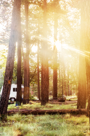 Morning sunlight beaming through trees in a camp site in Payson, Arizona USA