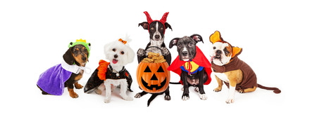 Five funny dogs wearing Halloween Costumes. Sized for horizontal banner or social media cover.