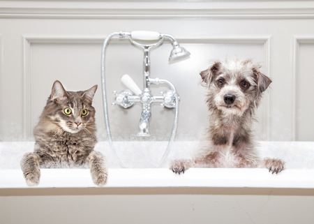 Gray color cat and dog sitting together in a luxury tub in an upscale bathroom Foto de archivo