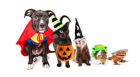 Row of household pets wearing halloween costumes. Sized for horizontal website banner or social media cover. Stock Photo